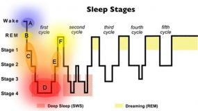 the stages of sleep